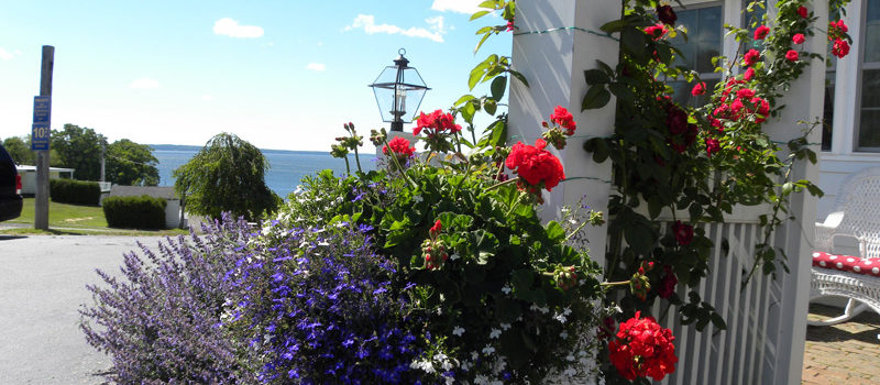 Beautiful flowers at Colonial Gables